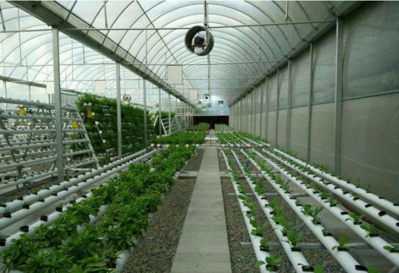 无土栽培 自动补水……这个智能温室大棚里每盆花每天都能采一枝